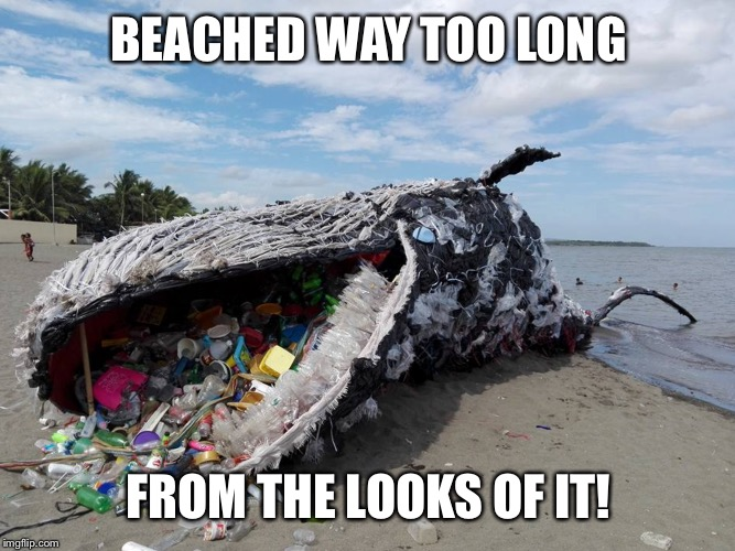 BEACHED WAY TOO LONG FROM THE LOOKS OF IT! | made w/ Imgflip meme maker