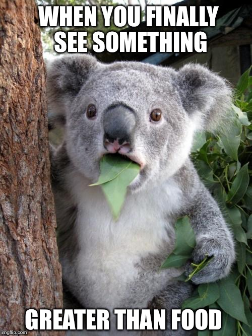 Surprised Koala Meme | WHEN YOU FINALLY SEE SOMETHING GREATER THAN FOOD | image tagged in memes,surprised koala | made w/ Imgflip meme maker