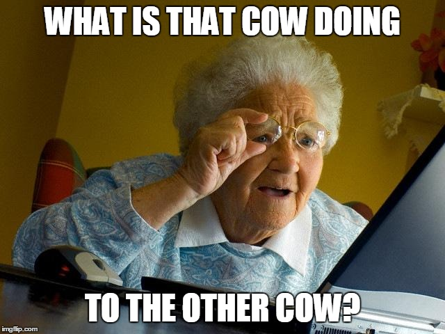 Grandma Finds The Internet Meme | WHAT IS THAT COW DOING TO THE OTHER COW? | image tagged in memes,grandma finds the internet | made w/ Imgflip meme maker