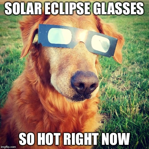 SOLAR ECLIPSE GLASSES SO HOT RIGHT NOW | image tagged in memes,animals,cute animals,solar eclipse | made w/ Imgflip meme maker