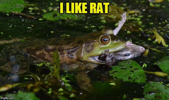 I LIKE RAT | made w/ Imgflip meme maker
