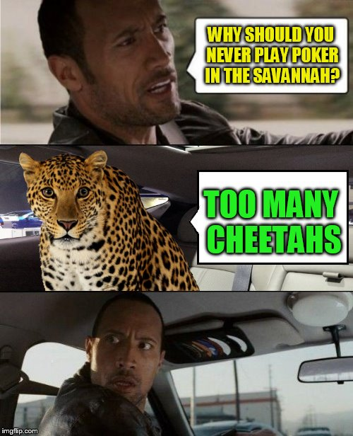 WHY SHOULD YOU NEVER PLAY POKER IN THE SAVANNAH? TOO MANY CHEETAHS | made w/ Imgflip meme maker