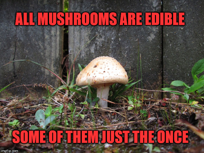 mushroom | ALL MUSHROOMS ARE EDIBLE SOME OF THEM JUST THE ONCE | image tagged in mushroom | made w/ Imgflip meme maker