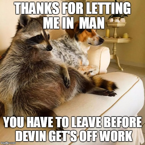 THANKS FOR LETTING ME IN  MAN YOU HAVE TO LEAVE BEFORE DEVIN GET'S OFF WORK | image tagged in racoon tv | made w/ Imgflip meme maker
