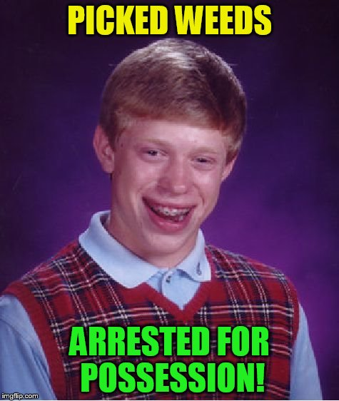 Bad Luck Brian Meme | PICKED WEEDS ARRESTED FOR POSSESSION! | image tagged in memes,bad luck brian | made w/ Imgflip meme maker
