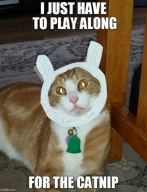 I JUST HAVE TO PLAY ALONG FOR THE CATNIP | image tagged in bunny cat | made w/ Imgflip meme maker