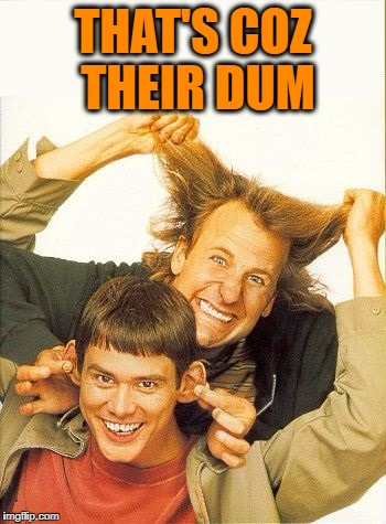 DUMB and dumber | THAT'S COZ THEIR DUM | image tagged in dumb and dumber | made w/ Imgflip meme maker