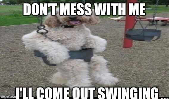 DON'T MESS WITH ME I'LL COME OUT SWINGING | made w/ Imgflip meme maker