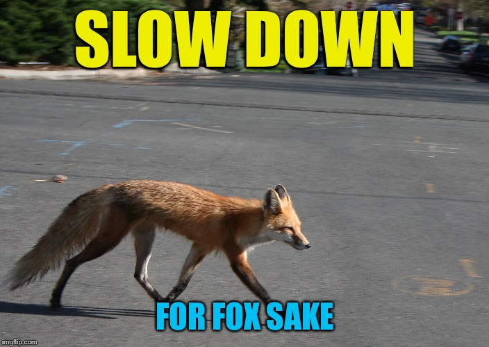 Jiminy Crickets! | SLOW DOWN FOR FOX SAKE | image tagged in memes,what does the fox say | made w/ Imgflip meme maker