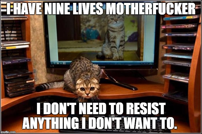 I HAVE NINE LIVES MOTHERF**KER I DON'T NEED TO RESIST ANYTHING I DON'T WANT TO. | image tagged in cat | made w/ Imgflip meme maker