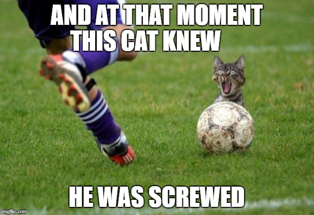 I'm Screwed | AND AT THAT MOMENT THIS CAT KNEW HE WAS SCREWED | image tagged in i'm screwed | made w/ Imgflip meme maker