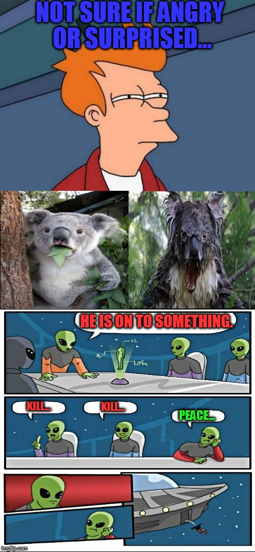 Brainfryed!!! | NOT SURE IF ANGRY OR SURPRISED... HE IS ON TO SOMETHING. KILL... KILL... PEACE... | image tagged in surprised koala,angry koala,futurama fry,alien meeting suggestion | made w/ Imgflip meme maker