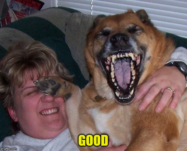 laughing dog | GOOD | image tagged in laughing dog | made w/ Imgflip meme maker