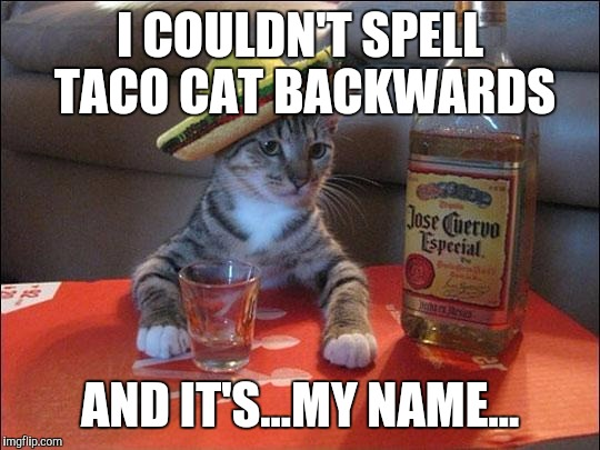 HIS BROTHER TUNA NUT WARNED HIM ABOUT THE SOBRIETY TEST! (tyvm to BBCimage for inspiration and isayisay for u shd post this) :D | I COULDN'T SPELL TACO CAT BACKWARDS AND IT'S...MY NAME... | image tagged in funny,partycat,humor,cats,animals,memes | made w/ Imgflip meme maker