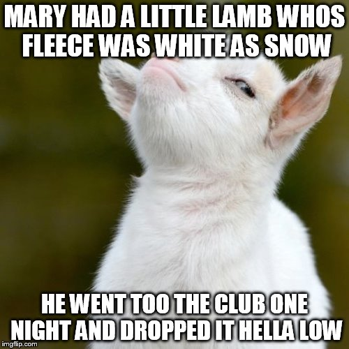 Suspicious lamb | MARY HAD A LITTLE LAMB WHOS FLEECE WAS WHITE AS SNOW HE WENT TOO THE CLUB ONE NIGHT AND DROPPED IT HELLA LOW | image tagged in suspicious lamb | made w/ Imgflip meme maker