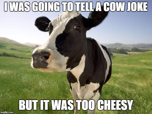 cow | I WAS GOING TO TELL A COW JOKE BUT IT WAS TOO CHEESY | image tagged in cow | made w/ Imgflip meme maker