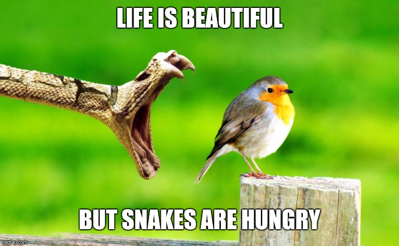 LIFE IS BEAUTIFUL BUT SNAKES ARE HUNGRY | image tagged in snake | made w/ Imgflip meme maker
