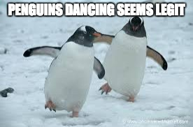 Image Tagged In Penguins Dance Imgflip