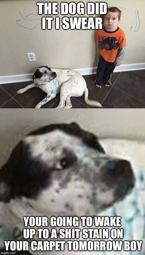 Bad dog | THE DOG DID IT I SWEAR YOUR GOING TO WAKE UP TO A SHIT STAIN ON YOUR CARPET TOMORROW BOY | image tagged in funny dogs | made w/ Imgflip meme maker