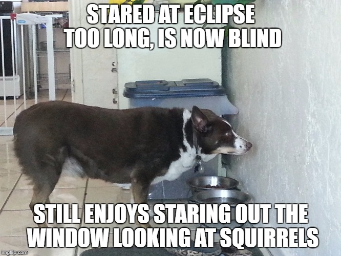 dog blindness | STARED AT ECLIPSE TOO LONG, IS NOW BLIND STILL ENJOYS STARING OUT THE WINDOW LOOKING AT SQUIRRELS | image tagged in solar eclipse,doggo,squirrels | made w/ Imgflip meme maker