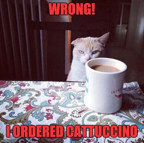 Cat Doesn't Like this Coffee |  WRONG! I ORDERED CATTUCCINO | image tagged in cat doesn't like this coffee | made w/ Imgflip meme maker
