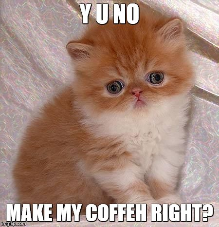 sad kitty | Y U NO MAKE MY COFFEH RIGHT? | image tagged in sad kitty | made w/ Imgflip meme maker