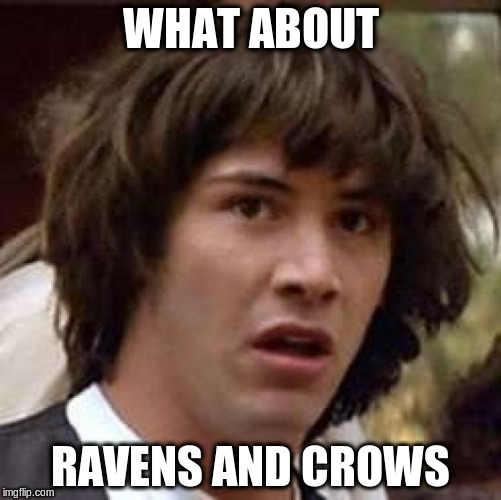 Conspiracy Keanu Meme | WHAT ABOUT RAVENS AND CROWS | image tagged in memes,conspiracy keanu | made w/ Imgflip meme maker