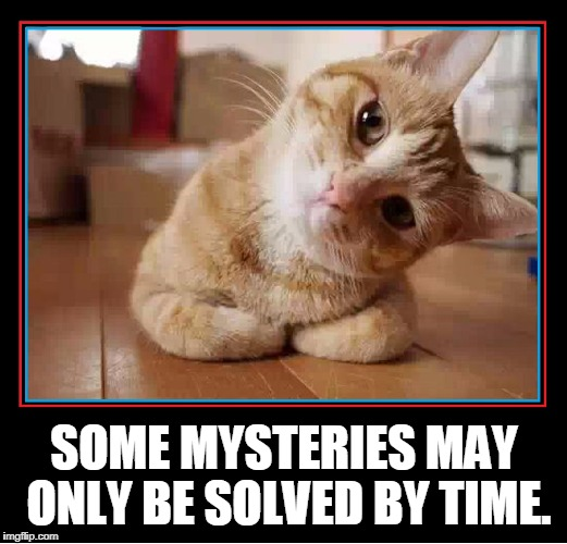 I Hope Curiosity Doesn't Kill the Cat | SOME MYSTERIES MAY ONLY BE SOLVED BY TIME. | image tagged in vince vance,cats,inquisitive cat,pondering the meaning of life,mysteries,it's a mystery | made w/ Imgflip meme maker