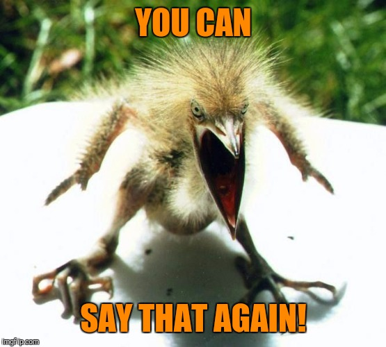 Angry bird | YOU CAN SAY THAT AGAIN! | image tagged in angry bird | made w/ Imgflip meme maker