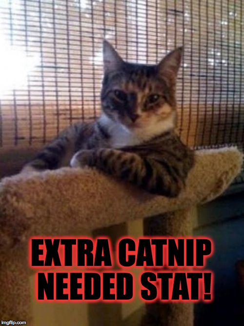EXTRA CATNIP NEEDED STAT! | made w/ Imgflip meme maker