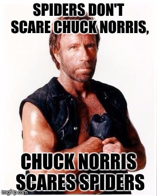 Prolly a repost, if it is, my bad. If not, I'm a frickin genious. Heh heh but hey, its not a race or politicaly motivated meme.  | SPIDERS DON'T SCARE CHUCK NORRIS, CHUCK NORRIS SCARES SPIDERS | image tagged in memes,chuck norris flex,chuck norris,sewmyeyesshut,funny | made w/ Imgflip meme maker