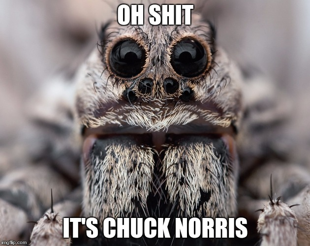 OH SHIT IT'S CHUCK NORRIS | made w/ Imgflip meme maker
