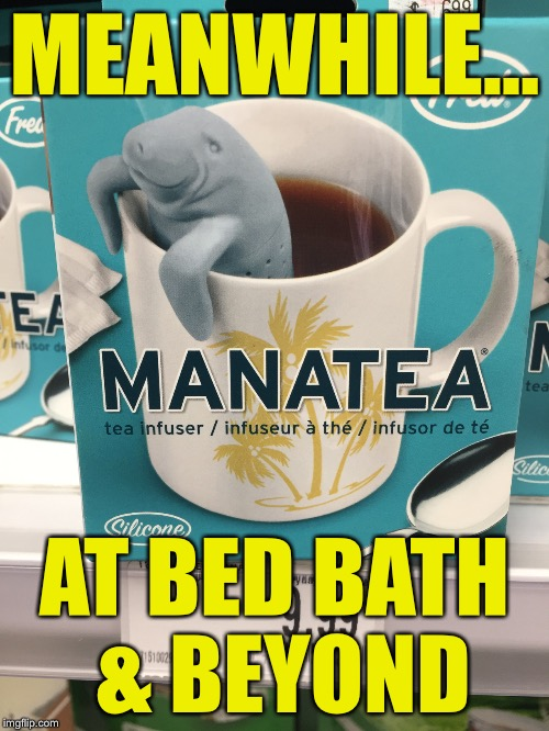Manatea  | MEANWHILE... AT BED BATH & BEYOND | image tagged in memes,manatee | made w/ Imgflip meme maker