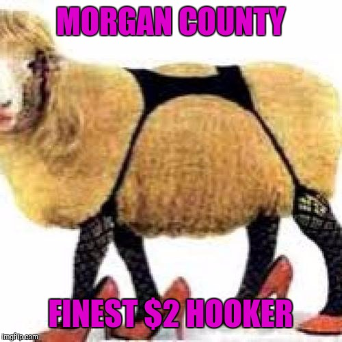 sexy sheep | MORGAN COUNTY FINEST $2 HOOKER | image tagged in sexy sheep | made w/ Imgflip meme maker