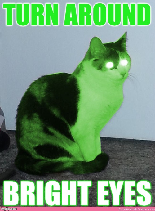 Hypno Raycat | TURN AROUND BRIGHT EYES | image tagged in hypno raycat | made w/ Imgflip meme maker