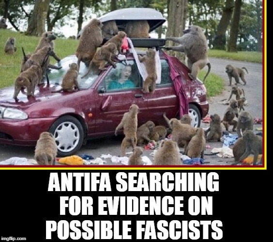 Your Local Neighborhood Antifa Tearing Our Country Apart | ANTIFA SEARCHING FOR EVIDENCE ON POSSIBLE FASCISTS | image tagged in vince vance,monkeys,a congress of baboons,antifa,antifa terrorizing america,liberal agenda | made w/ Imgflip meme maker