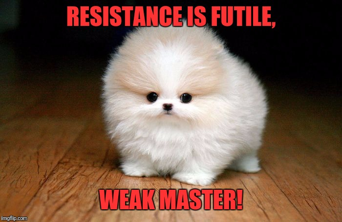 Cuteness overloading |  RESISTANCE IS FUTILE, WEAK MASTER! | image tagged in derp doge,memes,funny,funny memes,dank memes | made w/ Imgflip meme maker