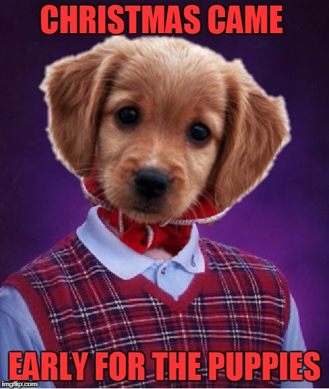 Bad Luck Bingley | CHRISTMAS CAME EARLY FOR THE PUPPIES | image tagged in bad luck bingley | made w/ Imgflip meme maker