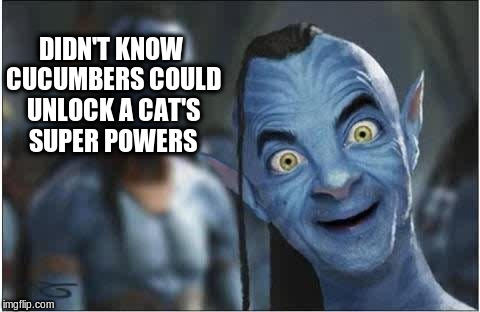 DIDN'T KNOW CUCUMBERS COULD UNLOCK A CAT'S SUPER POWERS | made w/ Imgflip meme maker