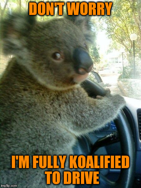 DON'T WORRY I'M FULLY KOALIFIED TO DRIVE | made w/ Imgflip meme maker