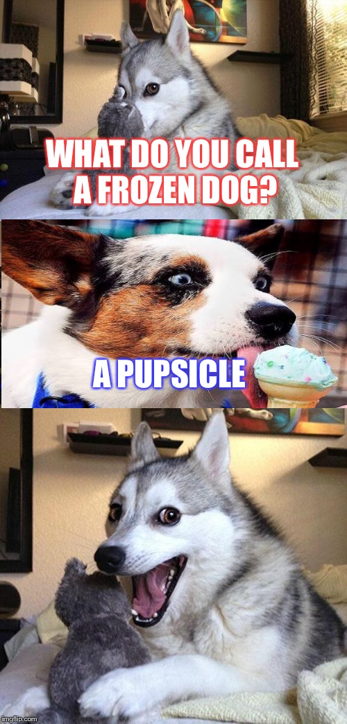 Bad Pun Dog Meme | WHAT DO YOU CALL A FROZEN DOG? A PUPSICLE | image tagged in memes,bad pun dog | made w/ Imgflip meme maker