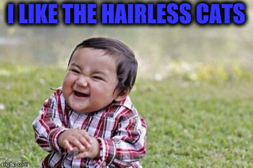 Evil Toddler Meme | I LIKE THE HAIRLESS CATS | image tagged in memes,evil toddler | made w/ Imgflip meme maker