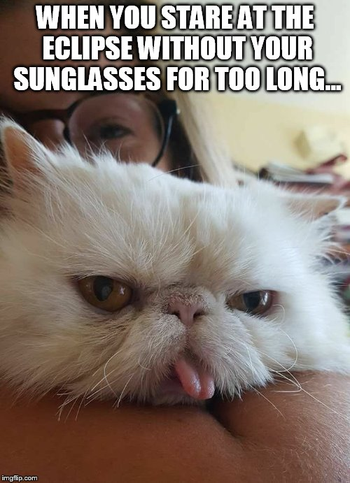 Mondays are for the blind | WHEN YOU STARE AT THE ECLIPSE WITHOUT YOUR SUNGLASSES FOR TOO LONG... | image tagged in ernie the cat,eclipse,mondays,cats,memes | made w/ Imgflip meme maker