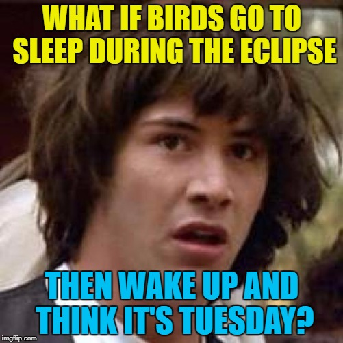 It could happen :) | WHAT IF BIRDS GO TO SLEEP DURING THE ECLIPSE THEN WAKE UP AND THINK IT'S TUESDAY? | image tagged in memes,conspiracy keanu,eclipse,birds,animals | made w/ Imgflip meme maker