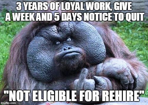 "Fat orangutan with middle finger | 3 YEARS OF LOYAL WORK, GIVE A WEEK AND 5 DAYS NOTICE TO QUIT ""NOT ELIGIBLE FOR REHIRE"" 
