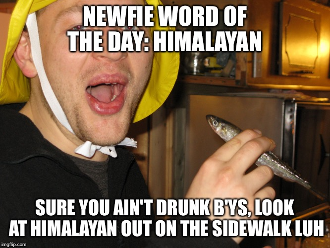 Newfie word of day | NEWFIE WORD OF THE DAY: HIMALAYAN SURE YOU AIN'T DRUNK B'YS, LOOK AT HIMALAYAN OUT ON THE SIDEWALK LUH | image tagged in newfie word of day | made w/ Imgflip meme maker