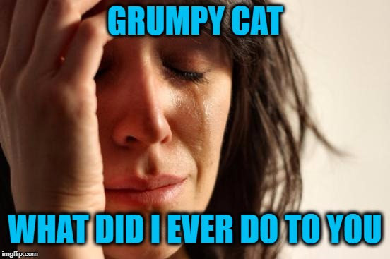 First World Problems Meme | GRUMPY CAT WHAT DID I EVER DO TO YOU | image tagged in memes,first world problems | made w/ Imgflip meme maker