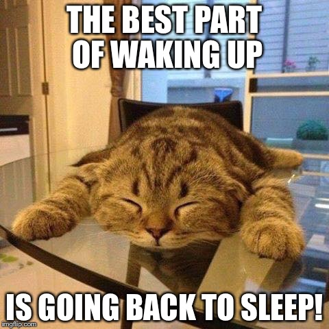 Sung to the folders jingle. | THE BEST PART OF WAKING UP IS GOING BACK TO SLEEP! | image tagged in sleepy cat | made w/ Imgflip meme maker