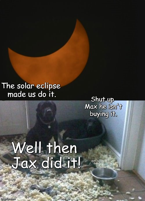 Eclipse of the DOGS! | The solar eclipse made us do it. Shut up Max he isn't buying it. Well then Jax did it! | image tagged in eclipse,wasn't me,he did it | made w/ Imgflip meme maker