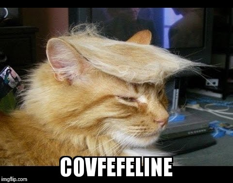 Covfefeline | image tagged in covfefe,crazy,trumpanzee,impeach trump,funny cats | made w/ Imgflip meme maker
